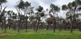 Trabajos forestales en la Casa de Campo, Madrid